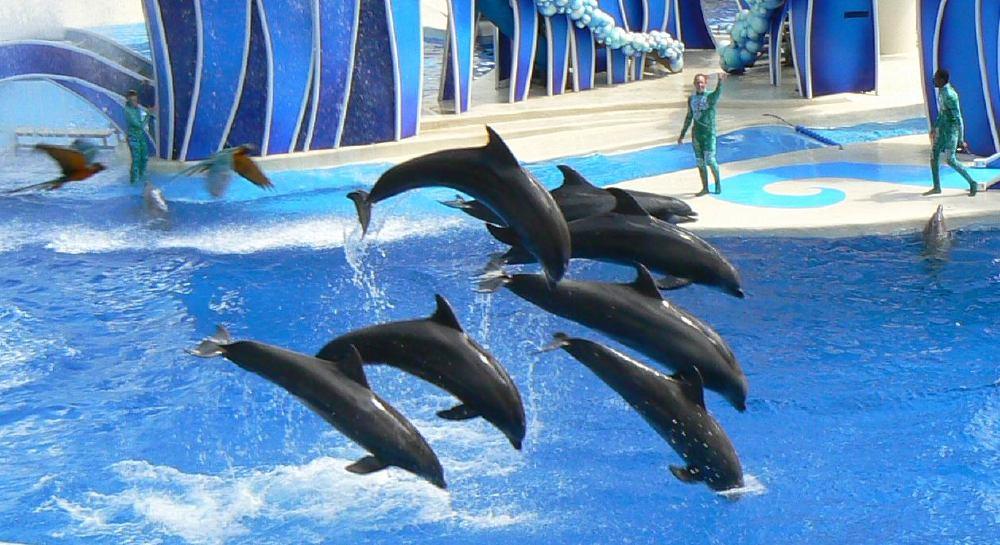 Parque SeaWorld em Orlando: golfinhos