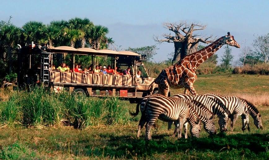 Onde comprar os ingressos da Disney Orlando: Animal Kingdom