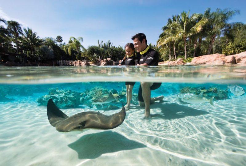 Parque Discovery Cove em Orlando: atrações