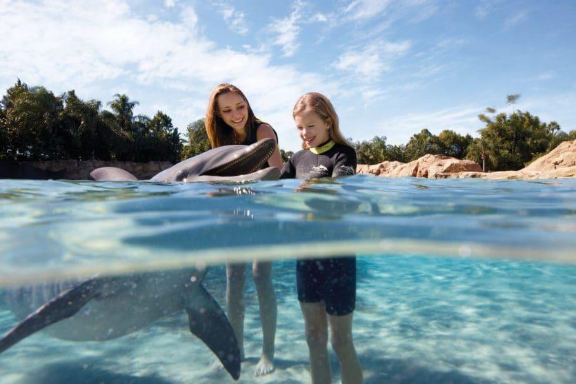 Parque Discovery Cove em Orlando: Dolphin Swim Experience
