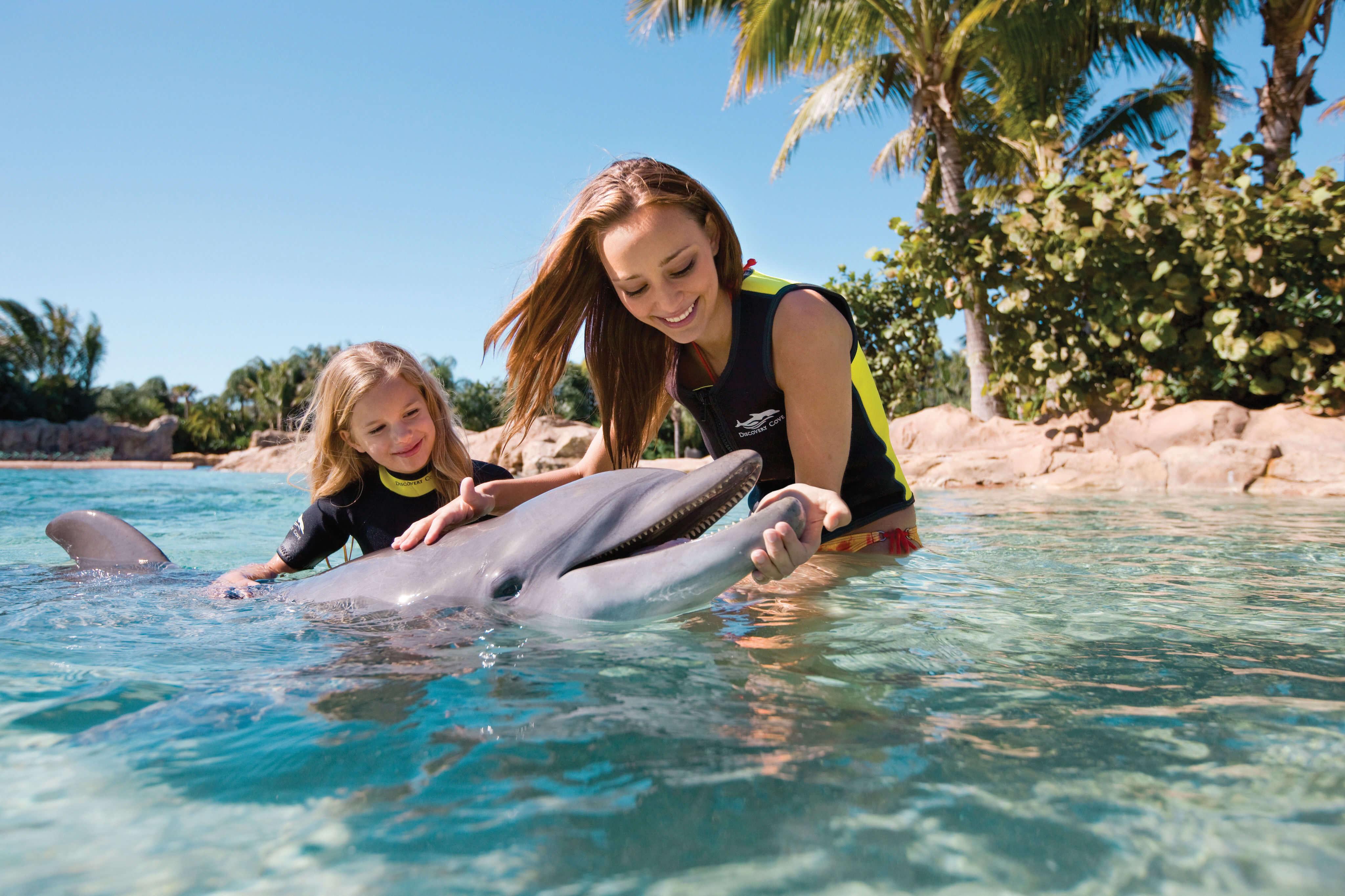 Nado com golfinho no parque Discovery Cove em Orlando
