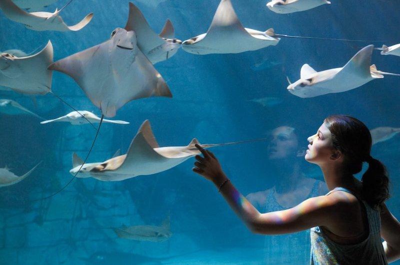 Parque SeaWorld em Orlando: Manta Aquarium