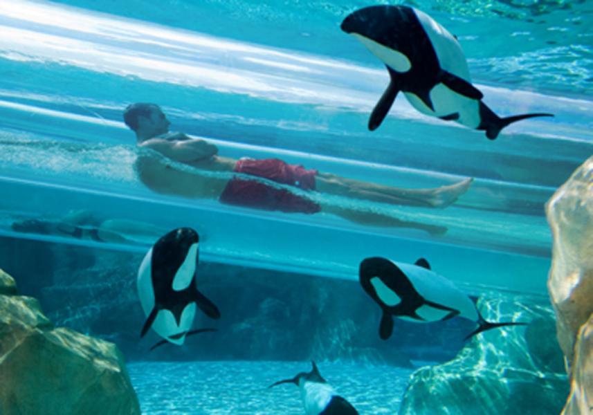 Parque Aquatica em Orlando: Dolphin Plunge