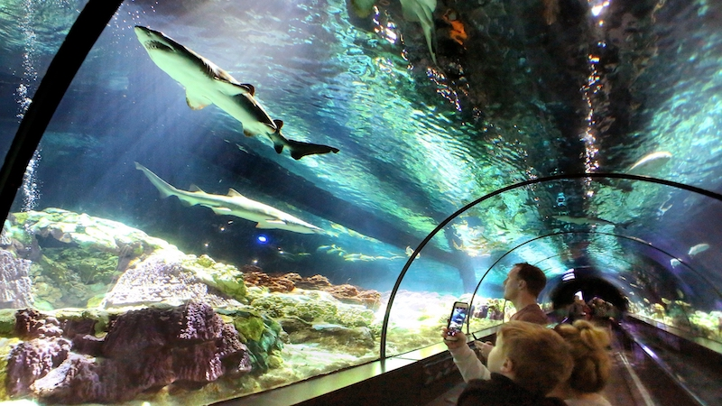 Parque SeaWorld em Orlando: Shark Encounter