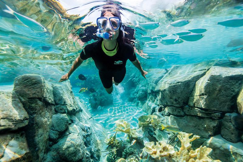 Parque Discovery Cove em Orlando: The Grand Reef