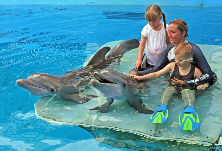 O que fazer em Clearwater: Clearwater Marine Aquarium