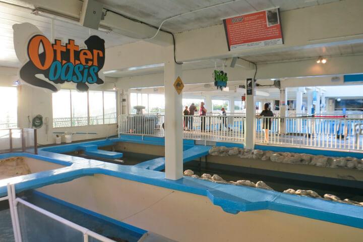 Clearwater Marine Aquarium: Otter Oasis