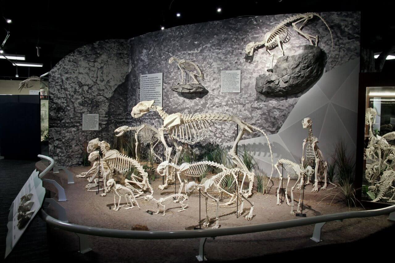 Complexo I-Drive 360 em Orlando: Museu Skeletons