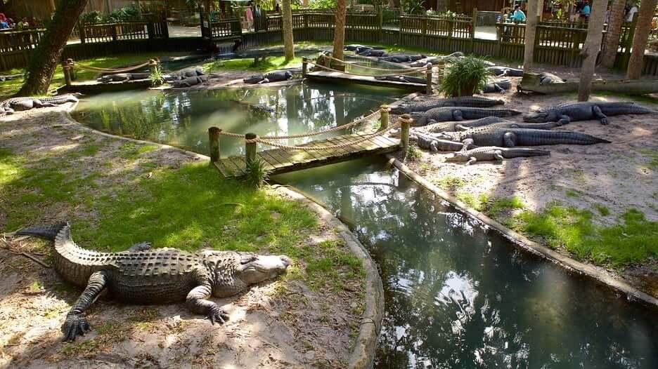 O que fazer em Saint Augustine: Alligator Farm