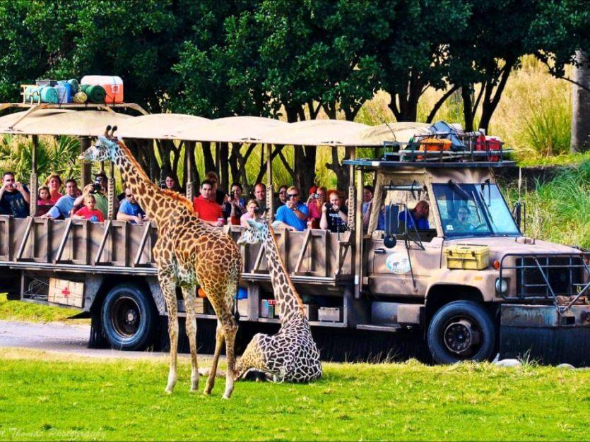 7 atrações e brinquedos do Parque Disney Animal Kingdom Orlando: Kilimanjaro Safaris