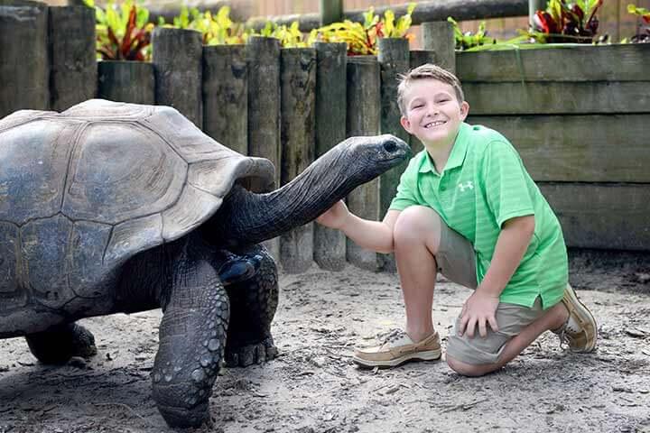 O que fazer em Tampa: Zoológico Lowry Park