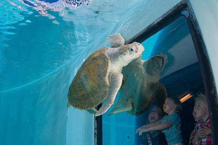 CityPASS em Tampa: Clearwater Aquarium