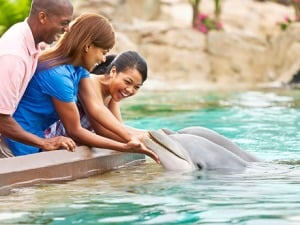 Onde nadar com golfinhos em Orlando: SeaWorld - Dolphins Up-Close Tour