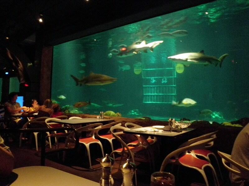 Alimentação saudável nos parques de Orlando: restaurante Sharks Underwater Grill