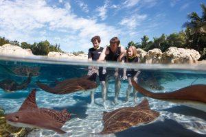 Ingressos e combos do Discovery Cove Orlando: atração