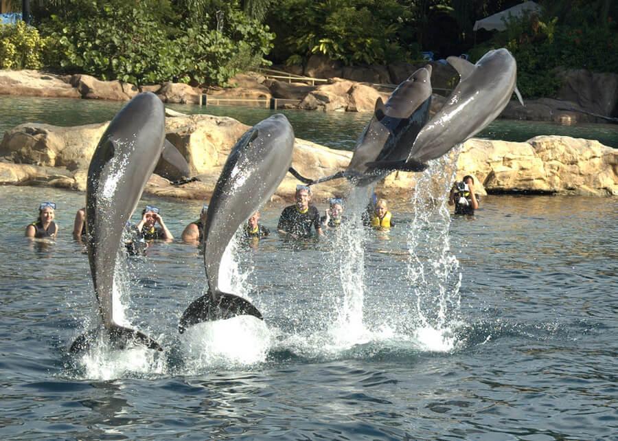 Parque Discovery Cove em Orlando: golfinhos na Dolphin Swim Experience
