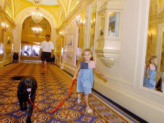Viajando com cachorros e animais para Disney e Orlando 1