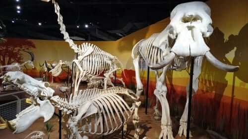 Museu Skeletons de ossos e esqueletos em Orlando