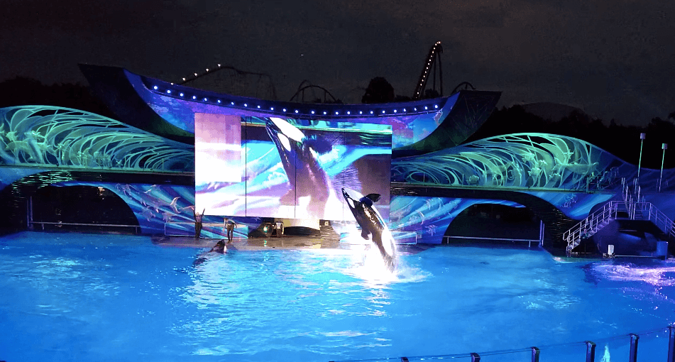 Electric Ocean no SeaWorld Orlando em 2020: Shamu's Celebration: Light Up the Night