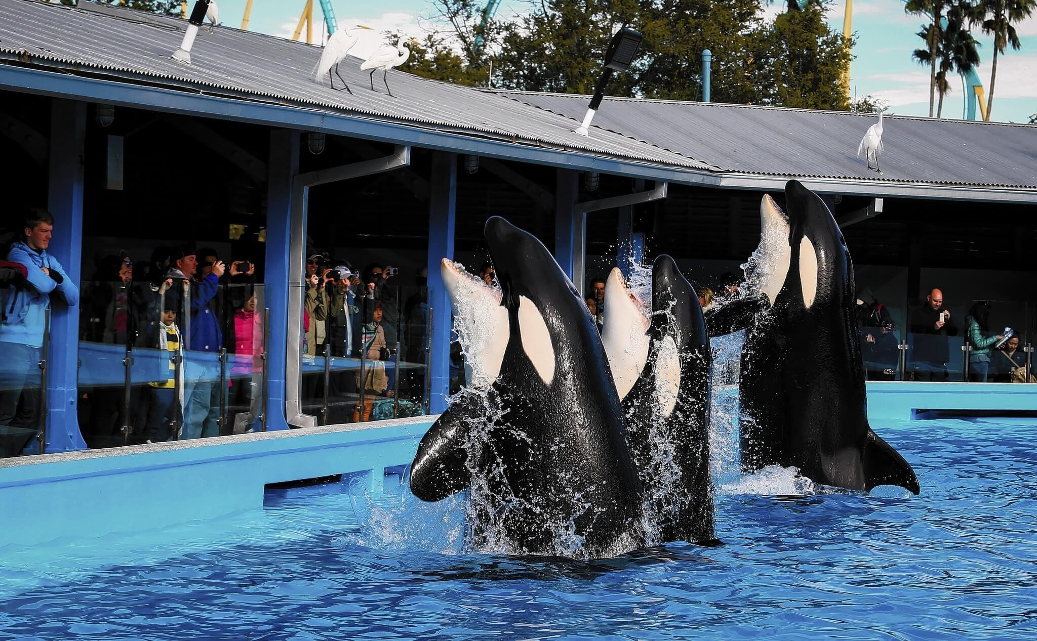 Parque SeaWorld em Orlando: baleias no Dining with Orcas