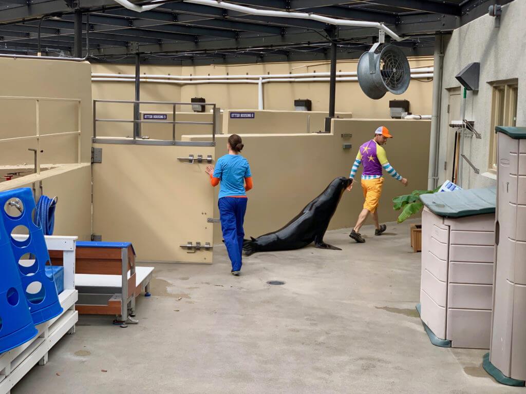 Passeio pelos bastidores do SeaWorld Orlando: tour