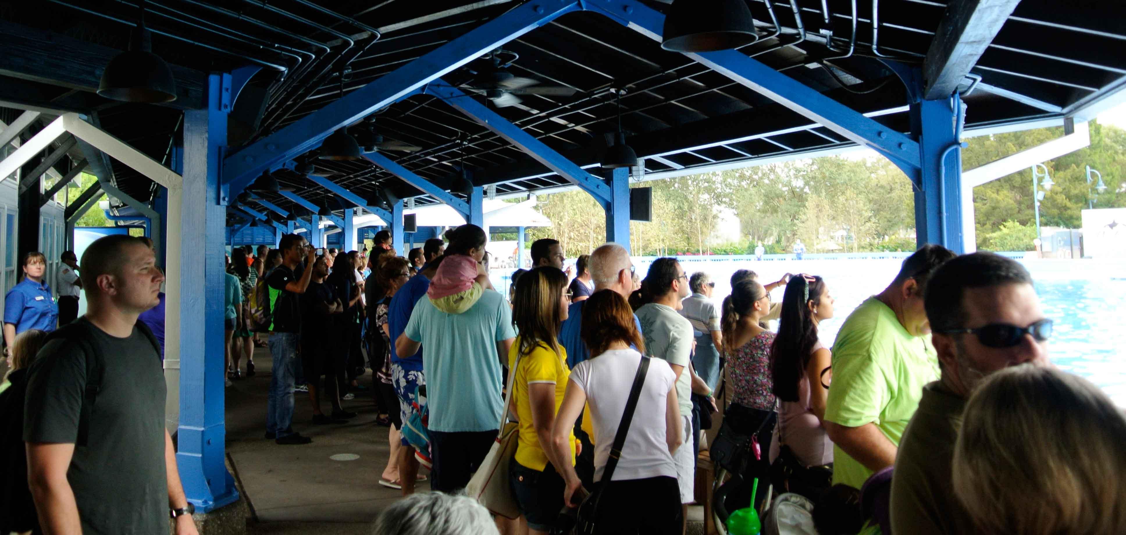 Refeição com a Shamu no SeaWorld Orlando: experiência