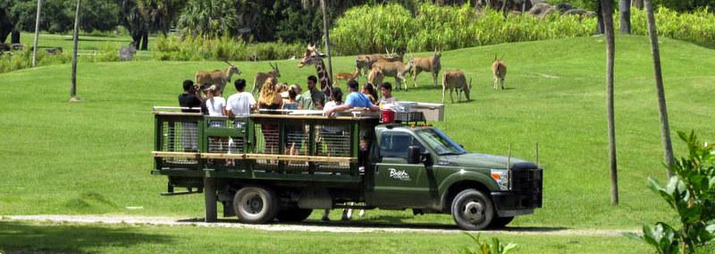 Safári no Busch Gardens Tampa Bay: caminhão