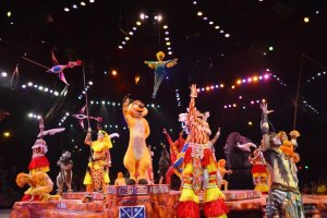 O Rei Leão no Animal Kingdom da Disney Orlando: Festival of the Lion King