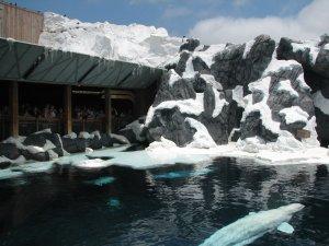 Como evitar filas nas principais atrações do SeaWorld Orlando: Wild Arctic