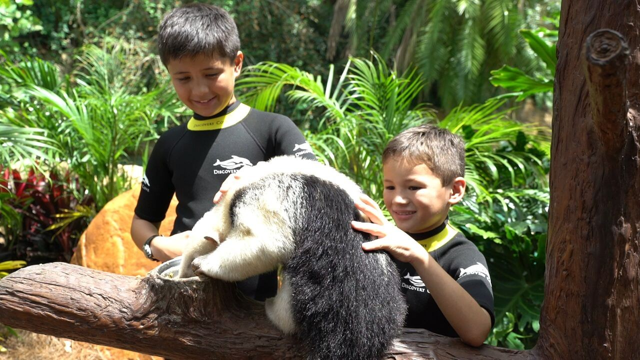 Animal Trek no parque Discovery Cove em Orlando