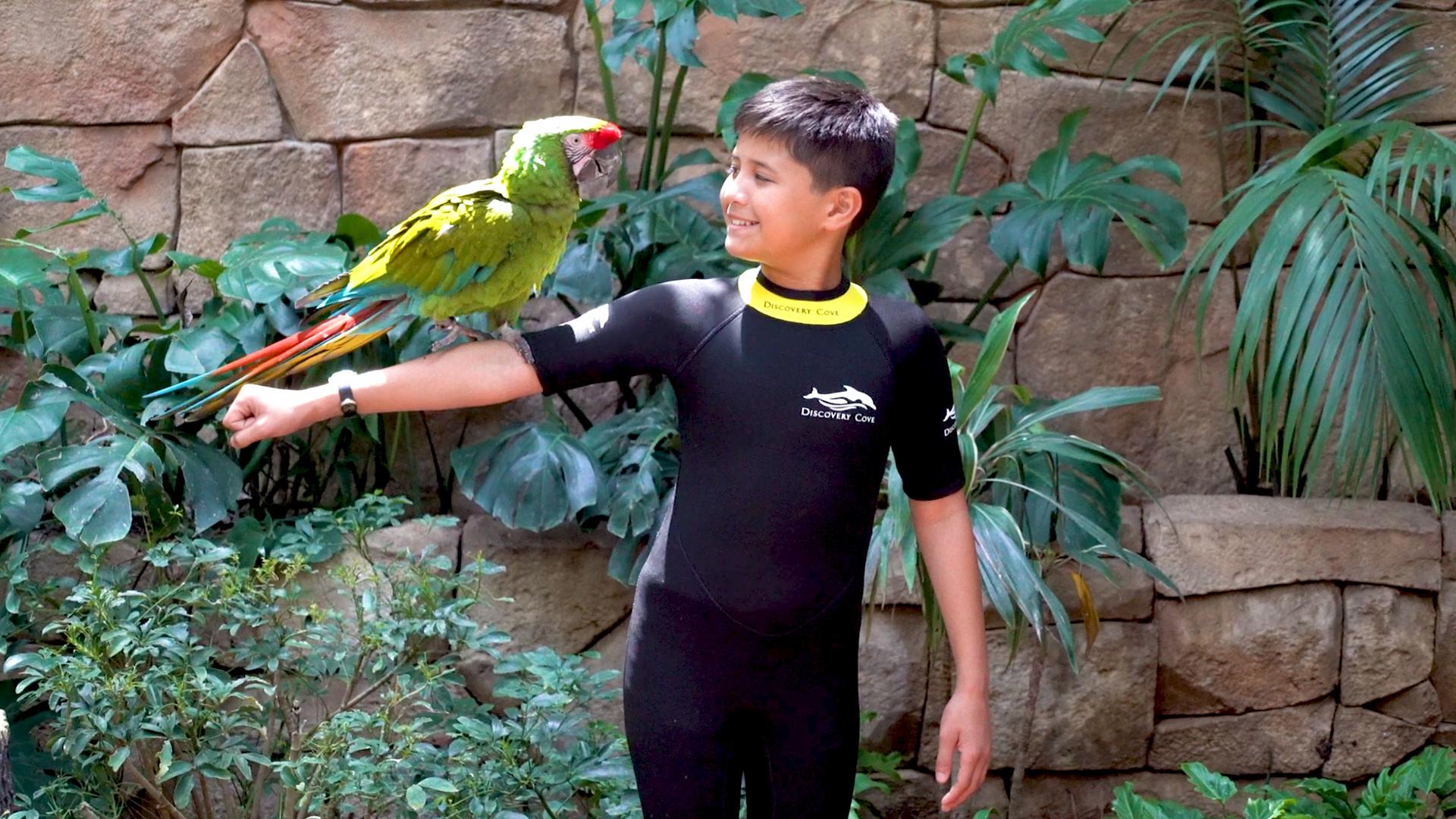 Parque Discovery Cove em Orlando: encontro com animais