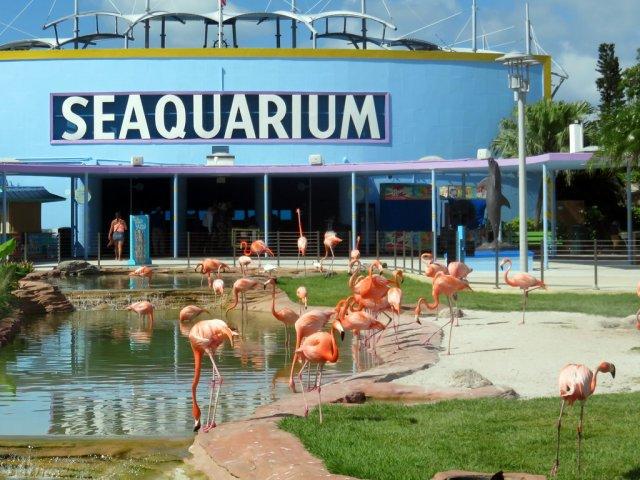 Ingressos para o aquário Miami Seaquarium