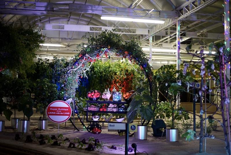Living with the Land: Merry and Bright Nights no Epcot da Disney Orlando: estufa