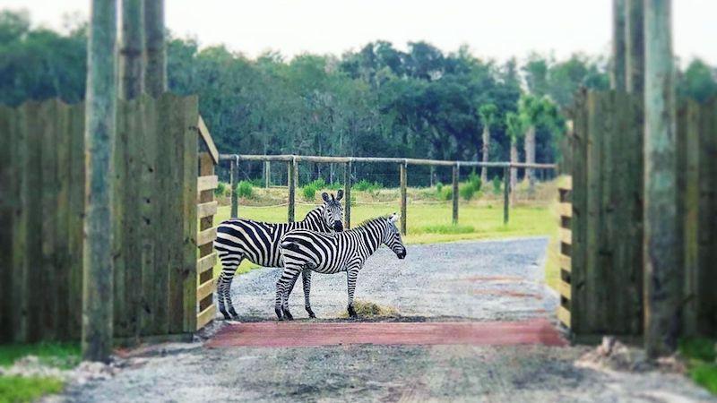 Parque Wild Florida Airboats & Gator: animais
