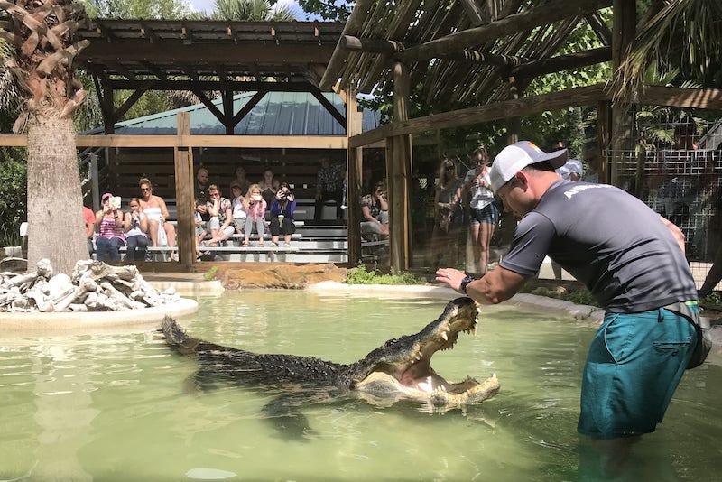 Parque Wild Florida Airboats & Gator: Gator Park
